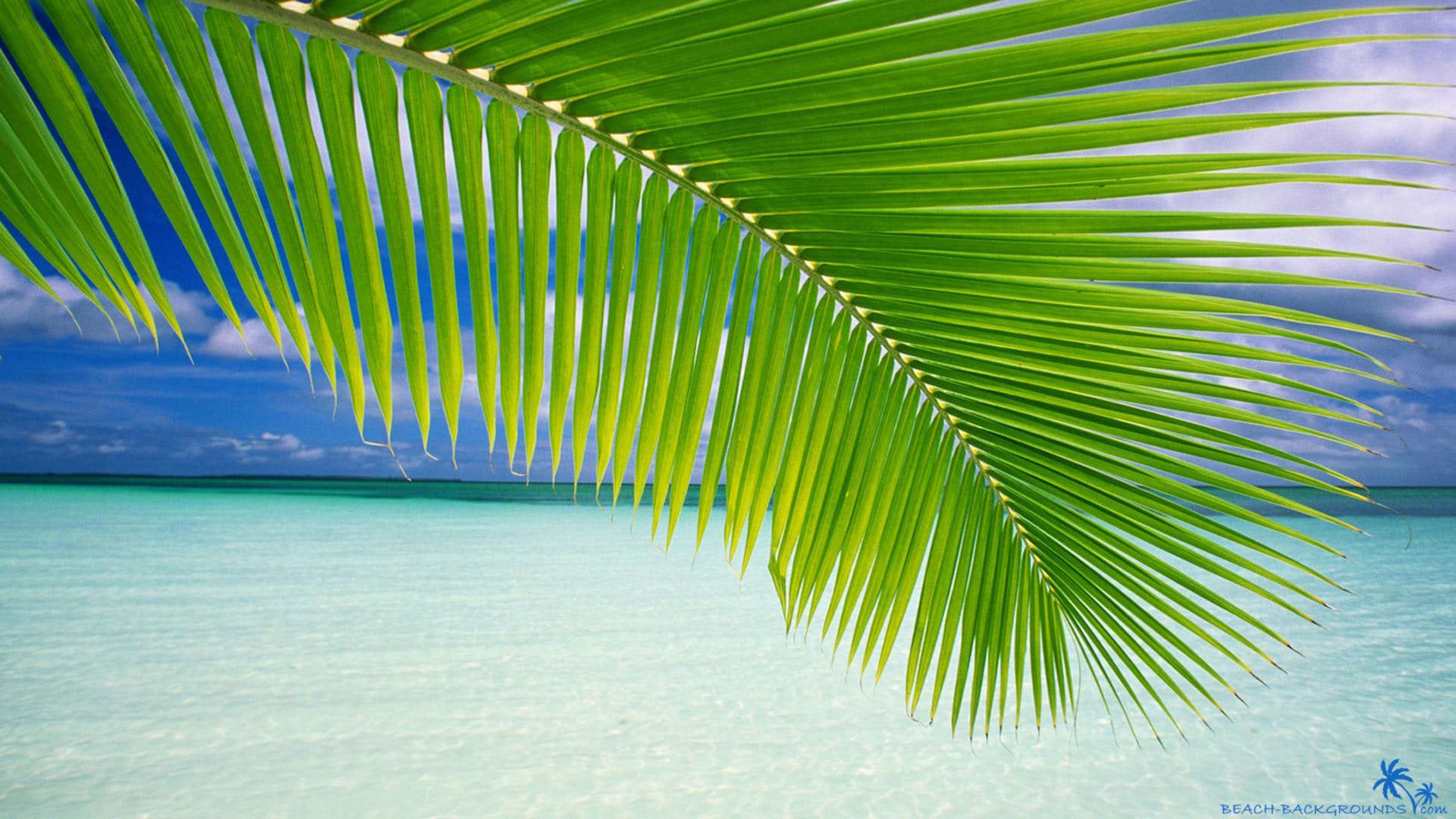 Beach palm green leaf - Beach Wallpapers