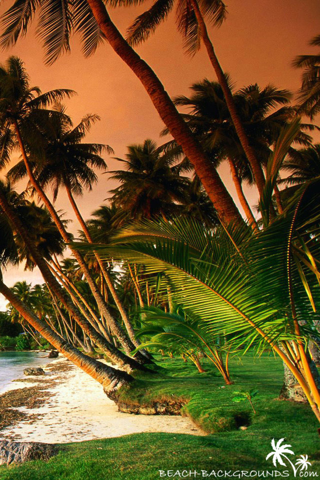 Beautiful beach palm trees on sunset beach wallpapers - Palm tree wallpaper for android ...