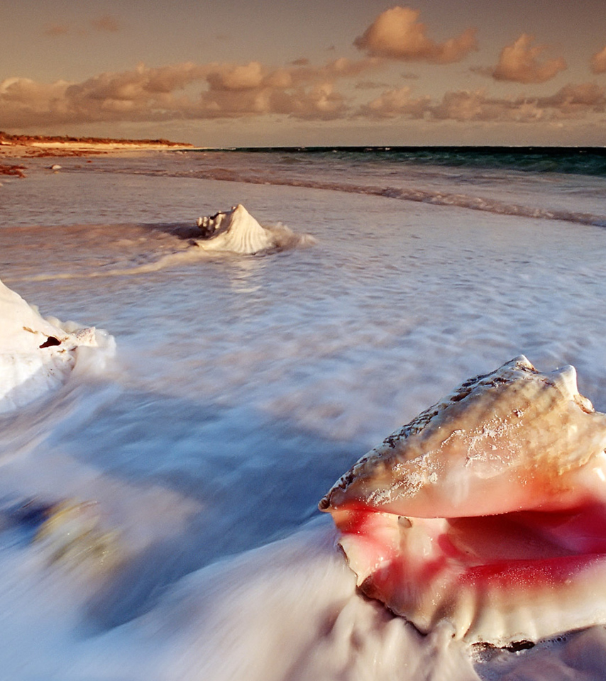 Conch Shells At Cat Island Of Bahamas Wallpaper Beach Wallpapers