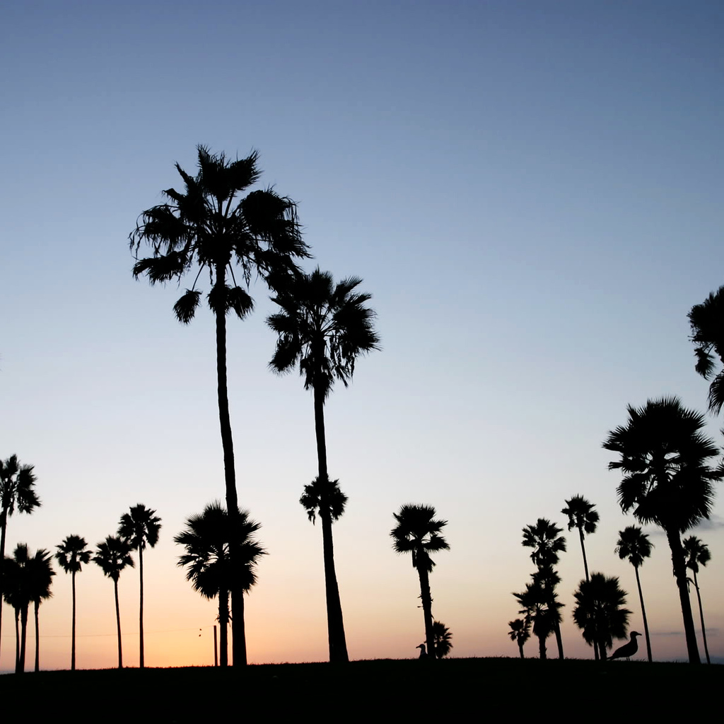 Cool Wallpaper Macbook Palm Tree - orange-sunset-mixed-with-black-palms-wallpaper-1024x1024-256  Best Photo Reference_335185.jpg
