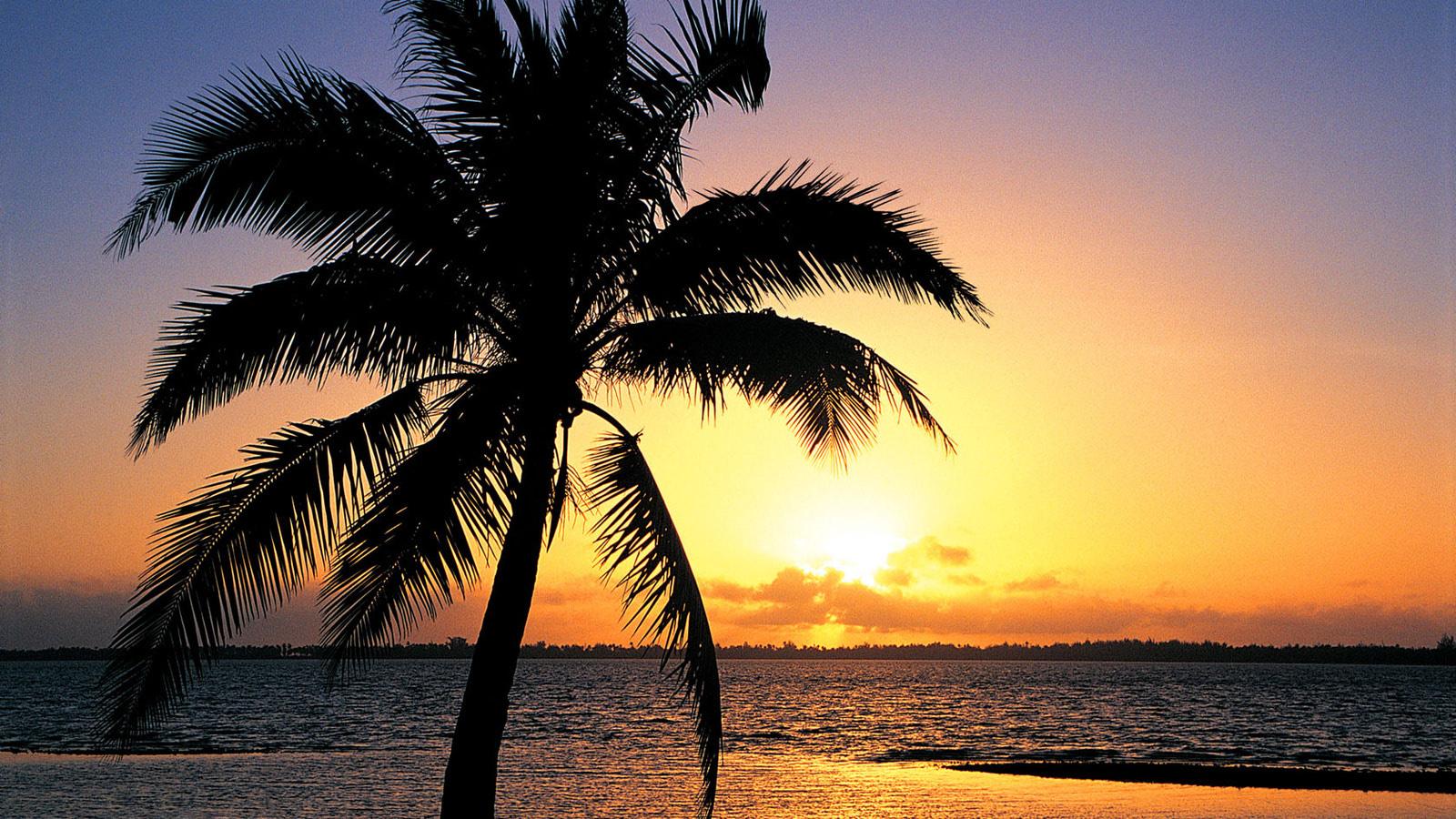 Wonderful Wallpaper Macbook Palm Tree - orange-sunset-on-the-tropic-beach-background-1600x900-174  Gallery_392111.jpg