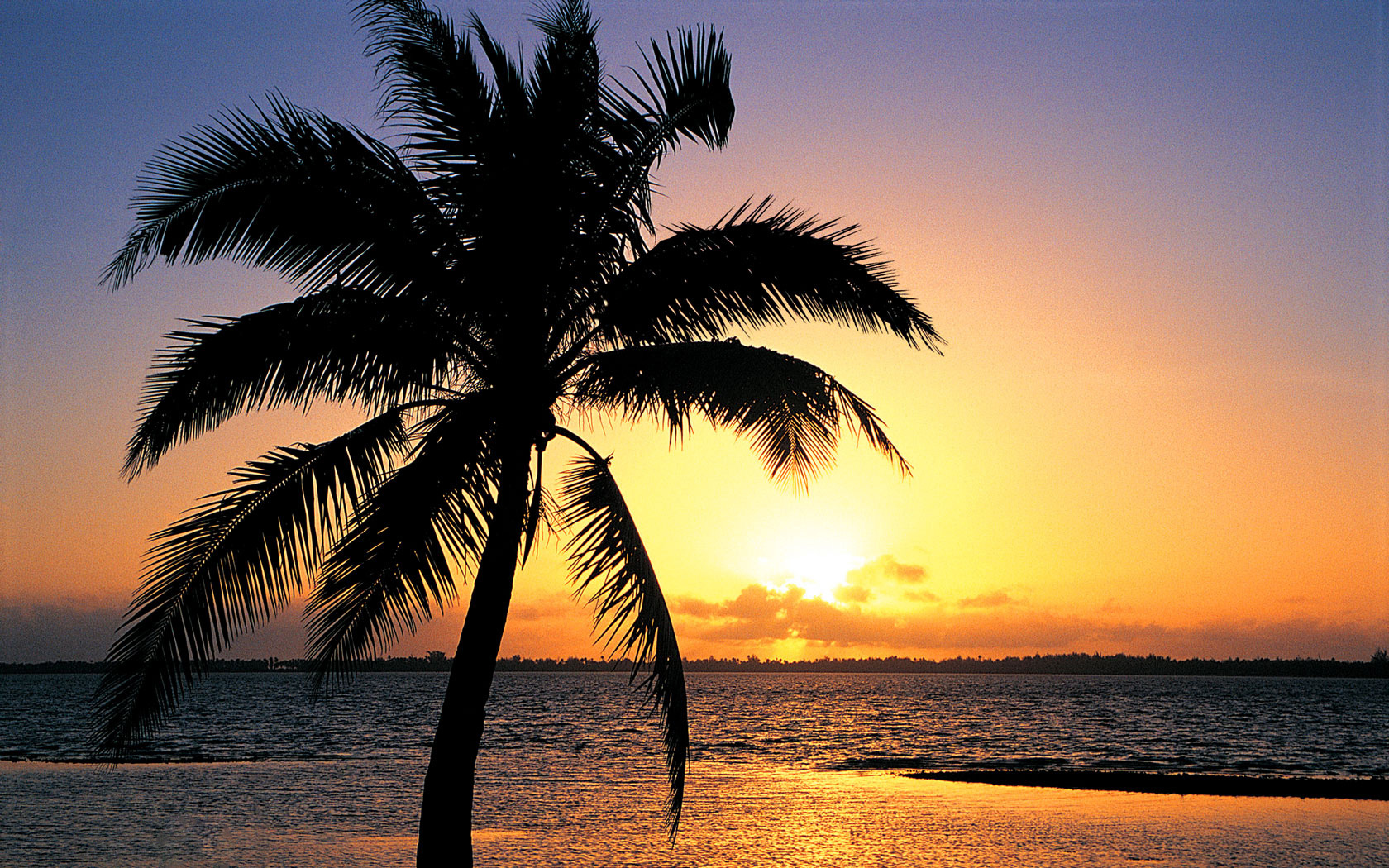 beach sunset with palm trees. download beach sunset with palm trees e