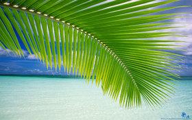 Beach palm green leaf