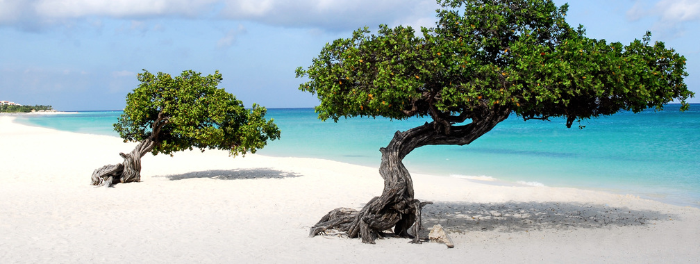 Beautiful wallpaper of Divi trees in Aruba island