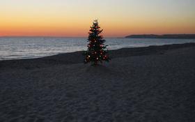 Christmas tree on a beach