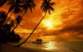 Tropical sunset wallpaper