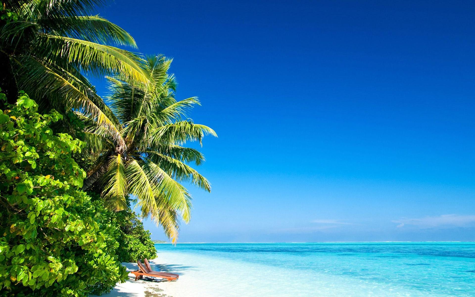 tropical ocean wallpaper
