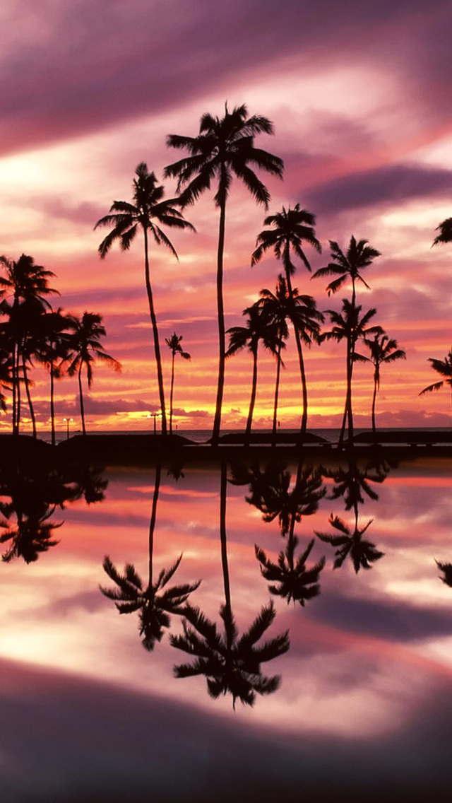 Hawaii Palm Trees Iphone Wallpaper Best Tree In The Forest