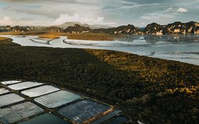 Aerial view of palm oil plantages in Krabi, Thailand