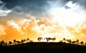 Beach Background: Beautiful Sunlight Over Palms