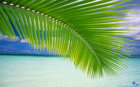 Beach palm green leaf