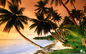 Beautiful beach palm trees on sunset