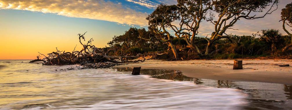 Driftwood Beach on Jekyll Island, Georgia