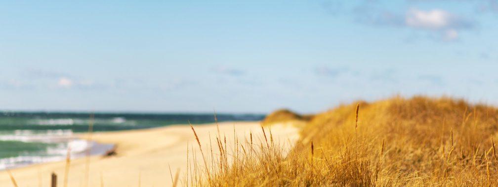 Dune grasses at Nantucket, MA, USA