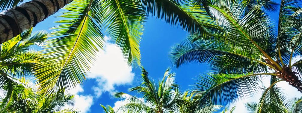 Fantastic look at palm trees on Waikiki beach, Hawaii, United States