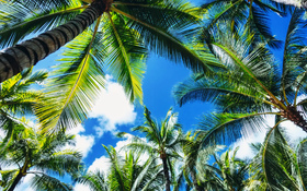 Fantastic look at palm trees on Waikiki beach, Hawaii, United States