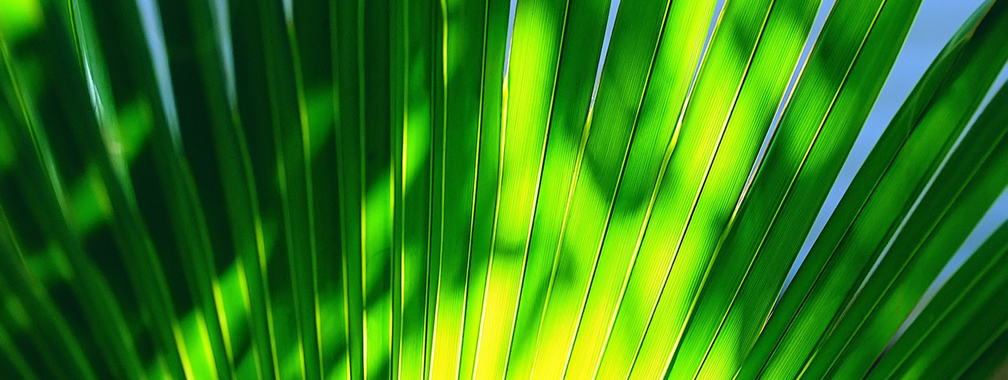 Green leaf on a high noon beach wallpaper