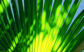 Green leaf on a high noon beach wallpaper