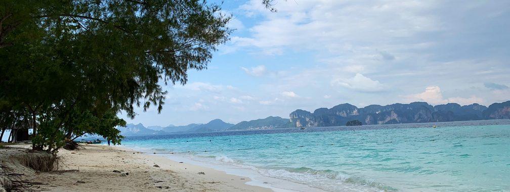 Green tree on white sandy beach in Krabi, Thailand