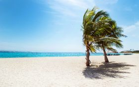 Hot wind and palm trees in Long Island, Bahamas