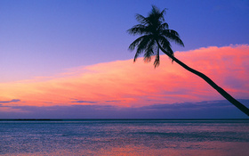 Look at the pink sunset from the beach wallpaper