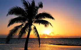 Orange sunset on the tropic beach background