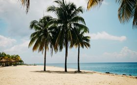 Palm trees at noon in Cozumel, Mexico