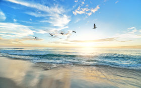 Sandy beach and seagull on Marine Street Beach in California, USA