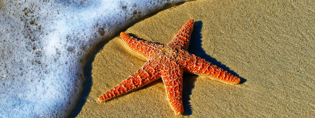 Starfish on a sand beach in Key West, United States