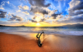 Sunset And Drift Wood On The Beach Background