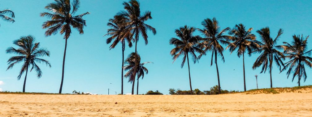 The big palm trees in Praia do Canto, Brazil