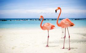 Two flamingos on beach background