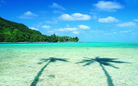 Two palms and turquoise sea beach wallpaper